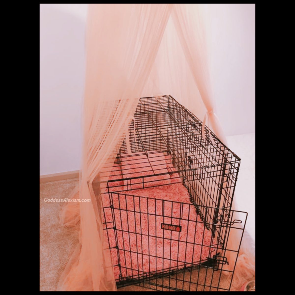 Sell your bed and get a cage to sleep in instead